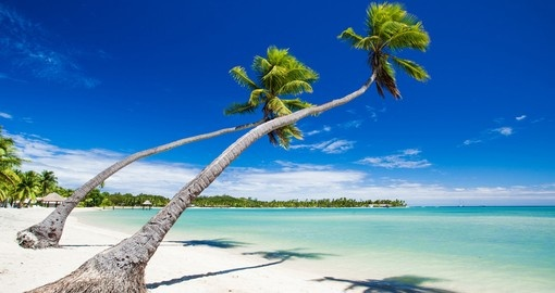 Lounge on the beach under the shade of the palm trees during your Trips to Fiji.