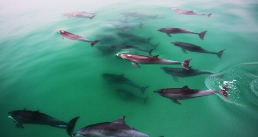 Explore Frolic with Dolphins during your next trip to Australia.