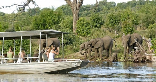 Chobe National Park, home to the world's largest remaining population of elephants