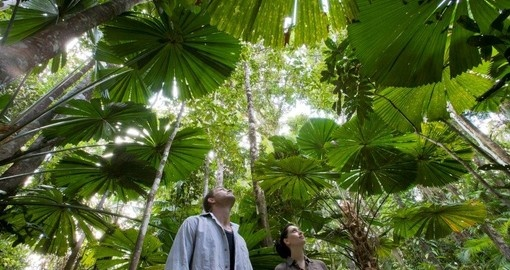 Explore and enjoy lush and beautiful Rainforest Walks