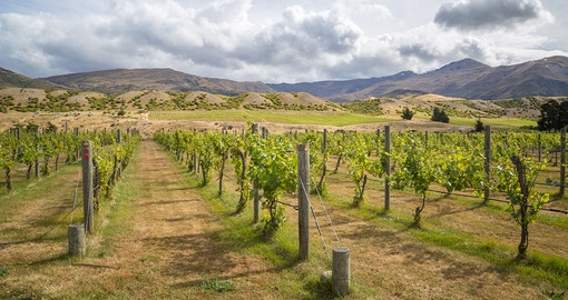 Visit vineyards in Central Otago on your New Zealand vacation