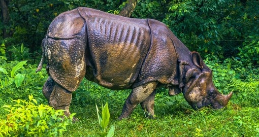 Your Nepal Vacation includes a visit to Chitwan National Park, home of the Indian Rhino