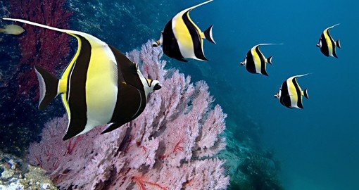 Experience diving on the Great Barrier Reef during your next Australia vacations.