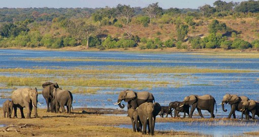 Botswana's first and most diverse, Chobe National Park has Africa's largest elephant population