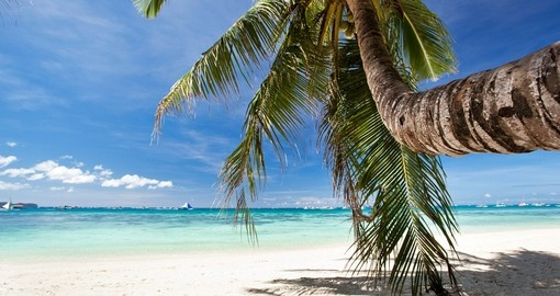 Beautiful palm on beach with white sand