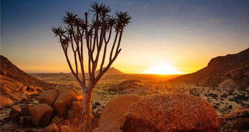 The unique flora and funa are highlights of your Namibia tour