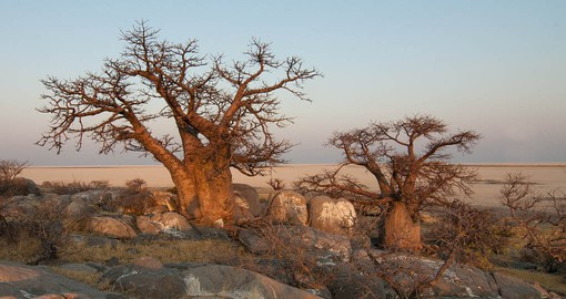 The Makgadikgadi Pans Game Reserve is situated in the middle of the dry savanna of north-eastern Botswana