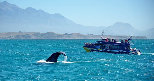 Go whale watching as part of your New Zealand vacation