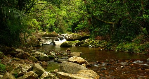 Stop at small Stream in the Coromandel Peninsula on your drive during your next trip to New Zealand.