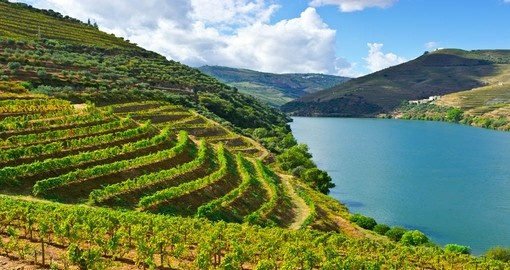 Vineyards in the Douro River Valley