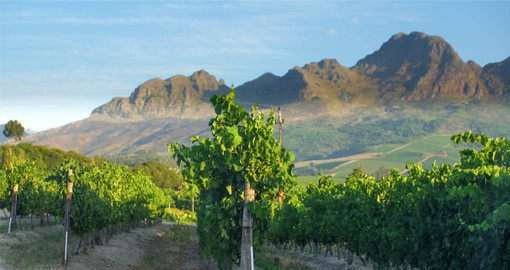 Not far from Cape Town, the beautiful winelands provide ideal microclimates for the vines