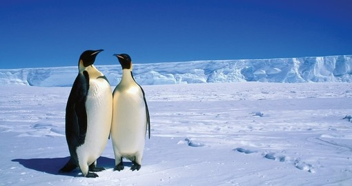 You will see plenty of wildlife during your Antarctica vacation.