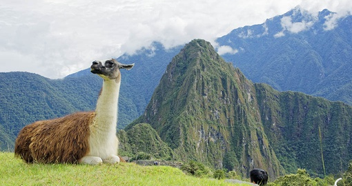 Meet other hooved animals on your Peru Tour
