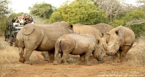 You might be able to meet White Rhinos in Thanda on your next trip to South Africa.