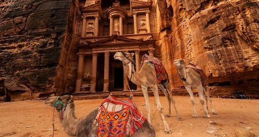 You might be able to see Camels at Petra during your next Jordan tours.