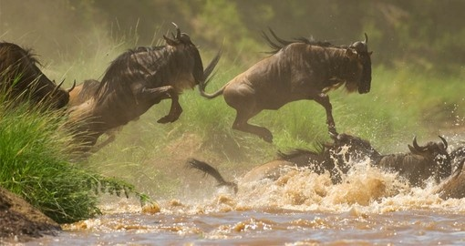 See the great migration on your Tanzania Safari