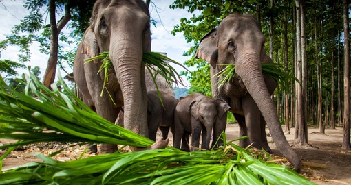 Spend time with elephants on your Thailand vacation