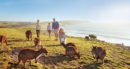 Kangaroos on clifftop at Stokes Bay, Kangaroo Island