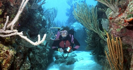 Roatan is home to the second largest coral reef in the world and a must see for divers during their Honduras tour