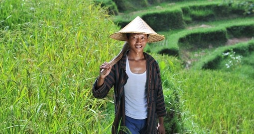 Traditional organic rice farmer