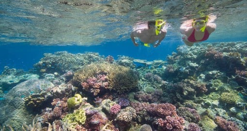 Enjoy a day of snorkeling on the Outer Barrier Reef