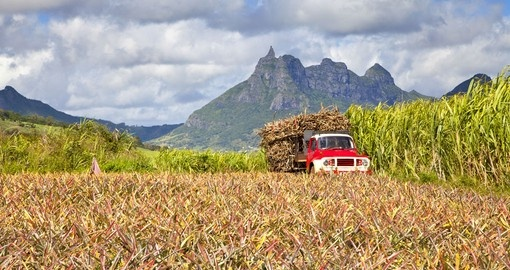 Truck with Sugar cane in Mauritius