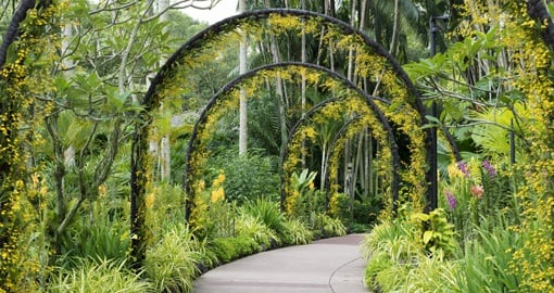 Visit the Botanical Gardens on your Singapore Tour