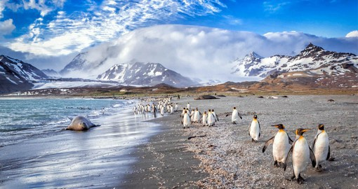 Stop at beautiful South Georgia Island on your Cruise to Antarctica