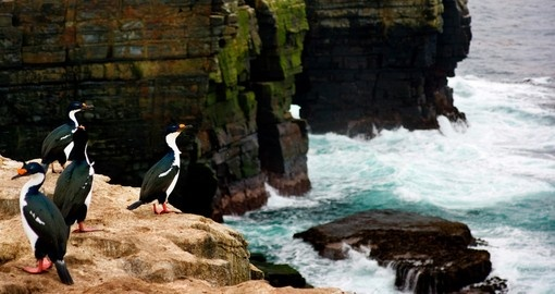 A Cormorant shakes its head and sprays water everywhere on a cliff edge