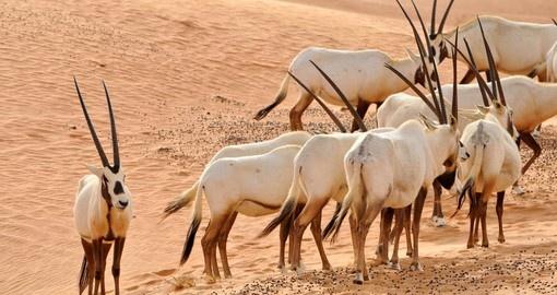 United Arab Emirates Nature And Wildlife Goway