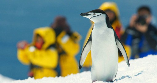 Photo opportunities abound in Antarctica to remember your vacation in Argentina
