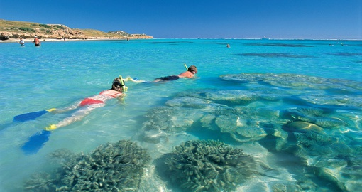 Reef Snorkel Tour on your next trip to Australia