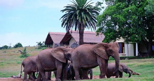 You will be staying at Gorah Elephant Camp during your South Africa vacation.