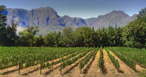 Explore Vineyards at Franschoek during your next South Africa tours.