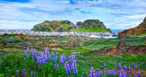 With rich history, unique landscape and welcoming inhabitants, the Westman Islands are Iceland's best kept secret