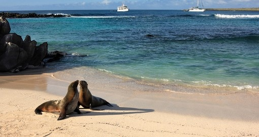 Seals on a beach in Galapagos