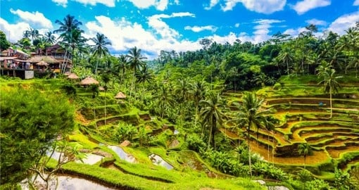 Your Bali Vacation travels inland to Ubud