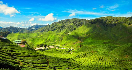 Your Malaysia tour package visits the tea plantations in the Cameron Highlights