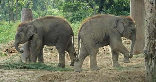 Two baby elephants in the park