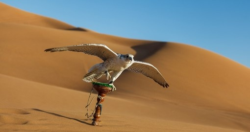 See a falconry display during your trip to Dubai.