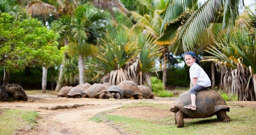 Fun activities in Mauritius