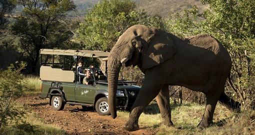 On the slopes of a 2-billion-year-old volcano, Pilanesberg is home to Africa's Big 5