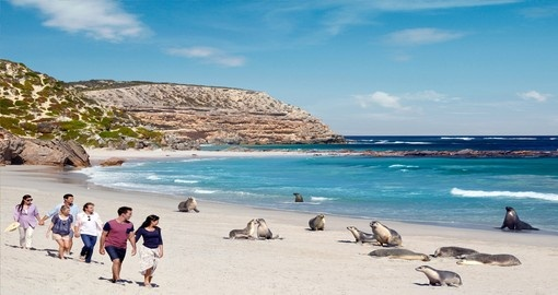 Seal Bay, Seal Bay Conservation Park Kangaroo Island - Image courtesy of Paul Torcello
