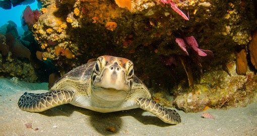 Playful green turtle