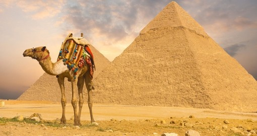 Camel tour of the Giza