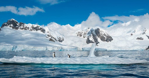 The Antarctica Peninsula is a major breeding ground for seabirds, seals and penguins