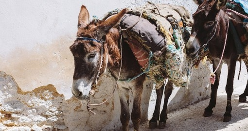 Donkey in the streets of Fez