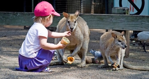 Let the kids enjoy spending time with the kangaroos