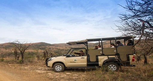 Enjoy game drives on your south africa vacation