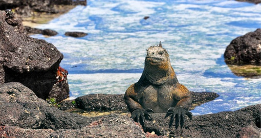 Make like an Iguana and get some sun on your Galapagos cruise